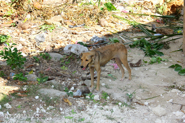 A stray dog in the village of Mencia in the Pedernales Province of the Dominican Republic.