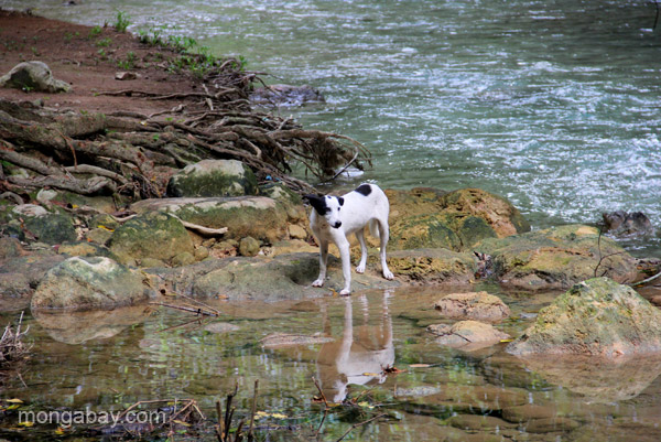 A stray dog by the river near the village of Mencia in the Pedernales Province of the Dominican Republic.