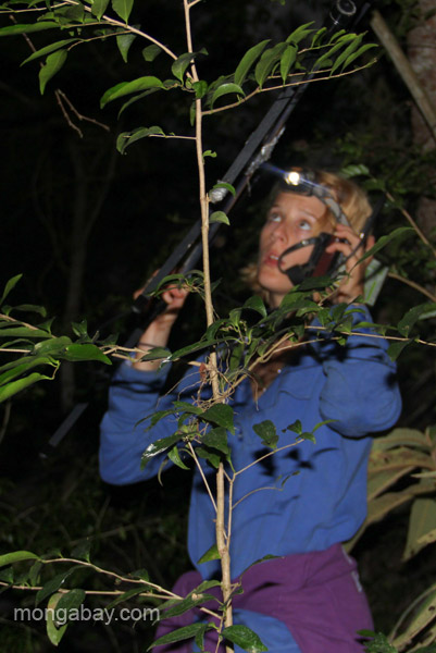 A researcher uses a radial device to track Hispaniolan hutia (Plagiodontia aedium) in the forests near the village of Mencia, Dominican Republic.