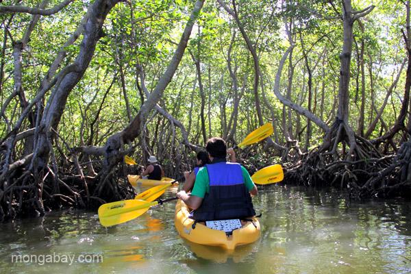 Kayaking through mangroves in Estero Hondo Marine Sanctuary in the Dominican Republic.