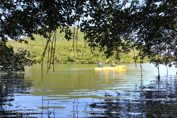 Kayaking through mangroves in Estero Hondo Marine Sanctuary in the Dominican Republic.