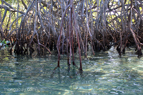Mangroves in the Estero Hondo Marine Sanctuary in the Dominican Republic.