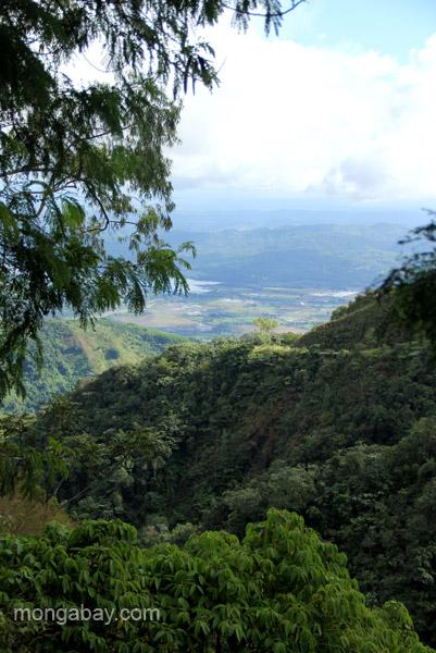 A reforestation project nursery near Estero Hondo Marine Sanctuary in the Dominican Republic.