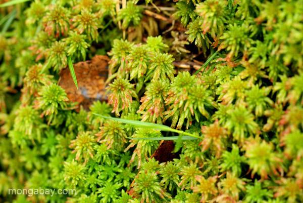 Flora of the Ebano Verde Scientific Reserve in the Dominican Republic.
