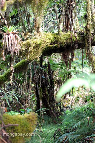 A tree with bromeliads in the Ebano Verde Scientific Reserve in the Dominican Republic.