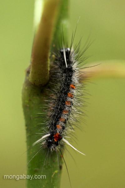 A caterpillar in the Ebano Verde Scientific Reserve in the Dominican Republic.