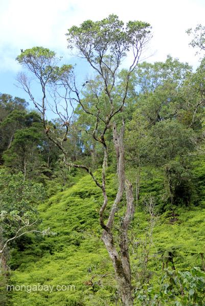 A tree in the Ebano Verde Scientific Reserve in the Dominican Republic.