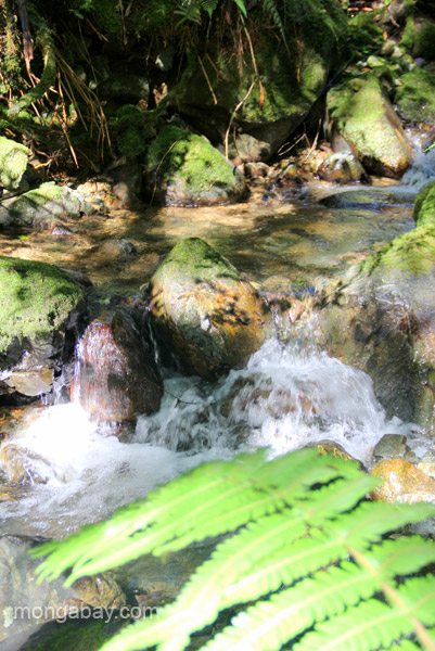 A veiw of the forest and river in the Ebano Verde Scientific Reserve in the Dominican Republic.