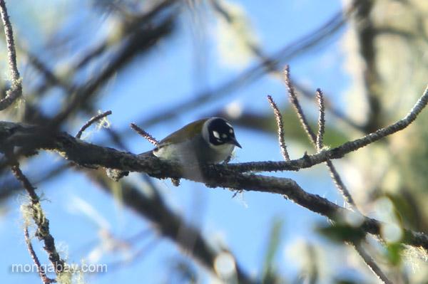 A bird in the Ebano Verde Scientific Reserve in the Dominican Republic.