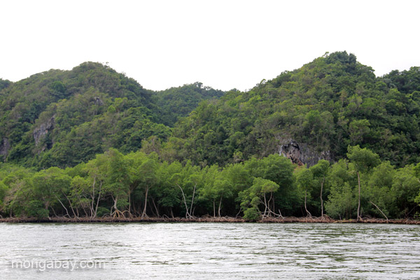 Impressive karst formations with mangroves in front in Los Haitises National Park in the Dominican Republic.