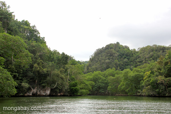 Impressive karst formations in Los Haitises National Park in the Dominican Republic.