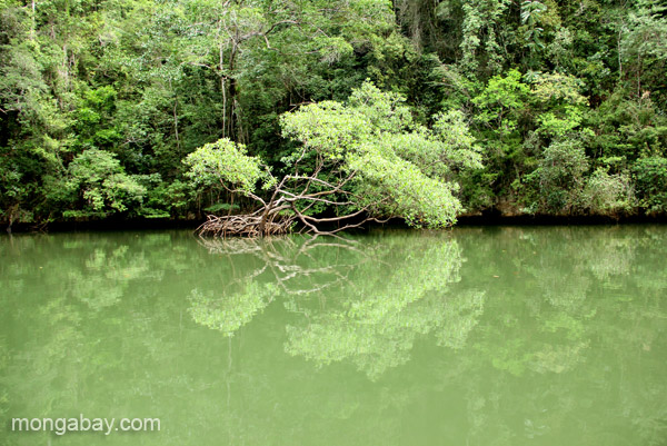 Mangroves in Los Haitises National Park in the Dominican Republic.
