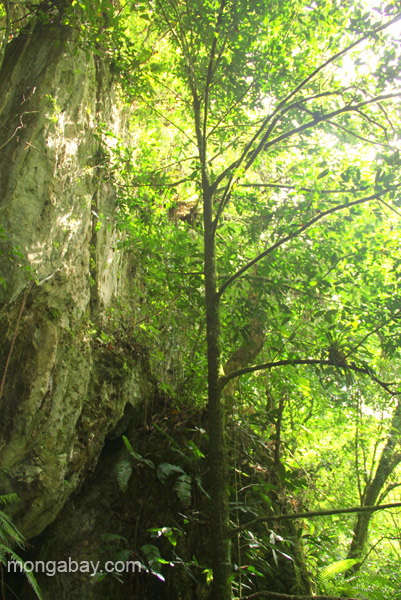 Rainforest and karst formations in Los Haitises National Park in the Dominican Republic.