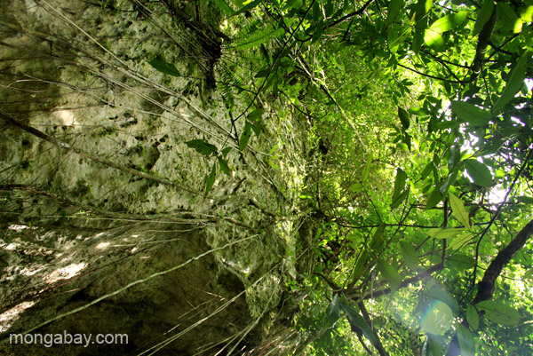 Impressive rainforest vines and karst formations in Los Haitises National Park in the Dominican Republic.