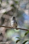 Unidentified bird [madagascar_ankarafantsika_0159]