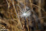 White flower [madagascar_ankarafantsika_0232]