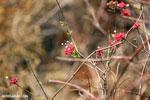 Red flowers [madagascar_ankarafantsika_0242]