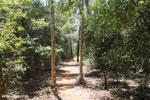 Trail in Ankarafantsika