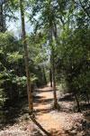 Trail in Ankarafantsika [madagascar_ankarafantsika_0257]