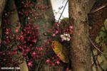 Flowers [madagascar_ankarafantsika_0340]