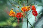 Flowers [madagascar_ankarafantsika_0344]