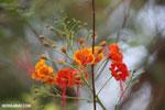 Flowers [madagascar_ankarafantsika_0345]