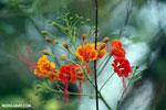 Flowers [madagascar_ankarafantsika_0346]