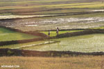 Rice fields at sunset in Madagascar [madagascar_ankarafantsika_0366]