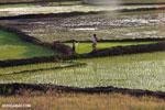 Rice fields at sunset in Madagascar [madagascar_ankarafantsika_0367]