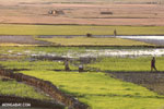 Rice fields at sunset in Madagascar [madagascar_ankarafantsika_0368]