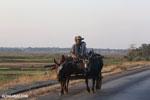 Men in a zebu cart [madagascar_ankarafantsika_0373]