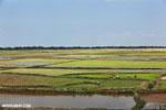 Malagasy villagers walking in a rice paddy [madagascar_ankarafantsika_0402]
