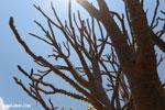 Spiny trees [madagascar_ankarafantsika_0448]
