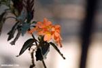 Flowers [madagascar_ankarafantsika_0461]