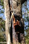 Honeycombs in Madagascar [madagascar_ankarafantsika_0508]