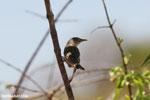 Bird [madagascar_ankarafantsika_0755]