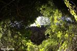 Dry forest of Ankarana [madagascar_ankarana_0110]