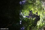 Dry forest of Ankarana [madagascar_ankarana_0111]