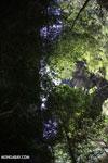 Dry forest of Ankarana [madagascar_ankarana_0112]
