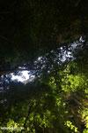 Dry forest of Ankarana [madagascar_ankarana_0113]