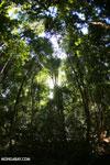 Ankarana dry forest [madagascar_ankarana_0171]