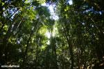 Ankarana dry forest [madagascar_ankarana_0172]