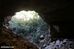 Ankarana dry forest [madagascar_ankarana_0189]