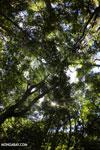 Ankarana dry forest [madagascar_ankarana_0192]