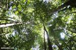 Ankarana dry forest [madagascar_ankarana_0193]
