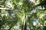 Ankarana dry forest [madagascar_ankarana_0194]