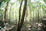 Ankarana dry forest [madagascar_ankarana_0195]