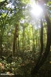 Ankarana dry forest [madagascar_ankarana_0196]