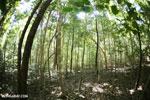 Ankarana dry forest [madagascar_ankarana_0197]