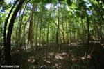 Ankarana dry forest [madagascar_ankarana_0198]